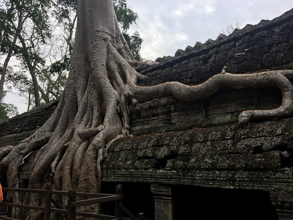 Amazing Cambodia and Thailand Trip - Ta Prohm Temple in Siem Reap