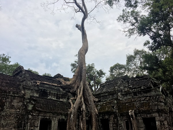 Amazing Cambodia and Thailand Trip - Ta Prohm