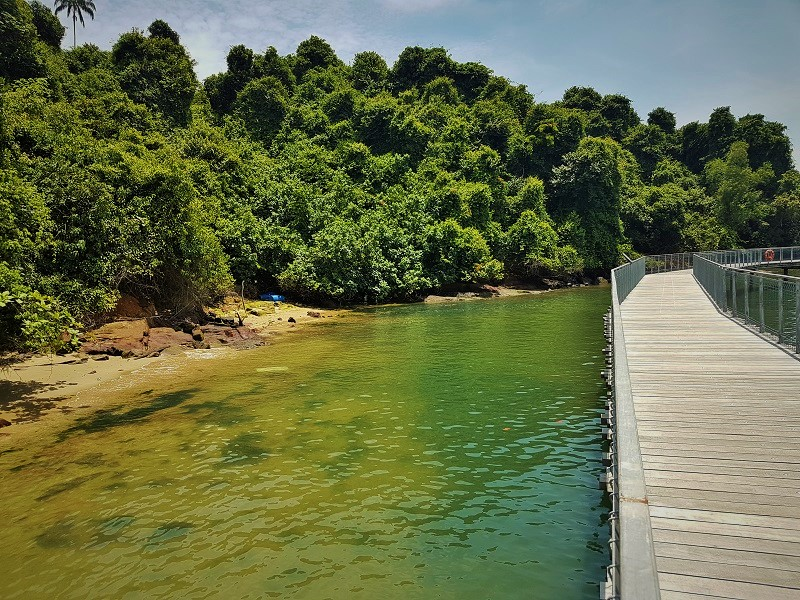 Chek Jawa Broad Walk - Detailed Guide to Pulau Ubin Singapore