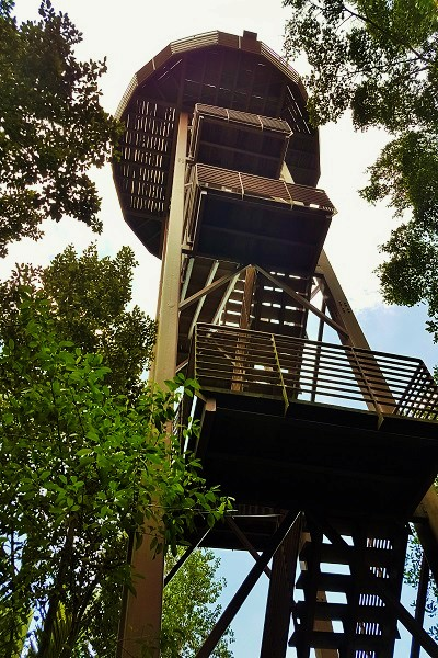 Jejawi Tower at Chek Jawa Wetland - Detailed Guide to Pulau Ubin Singapore