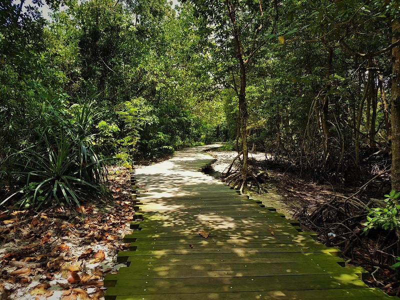 Mangrove Broad Walk - Detailed Guide to Pulau Ubin