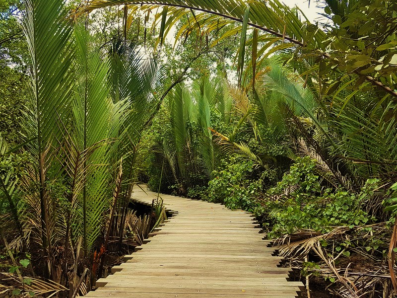 Mangrove Forest Broad Walk - Detailed Guide to Pulau Ubin Singapore