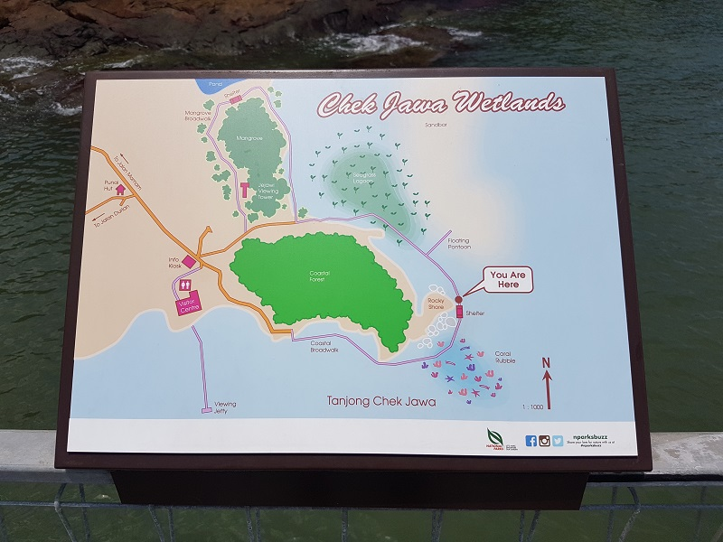 Map of Chek Jawa Wetlands - Detailed Guide to Pulau Ubin Singapore