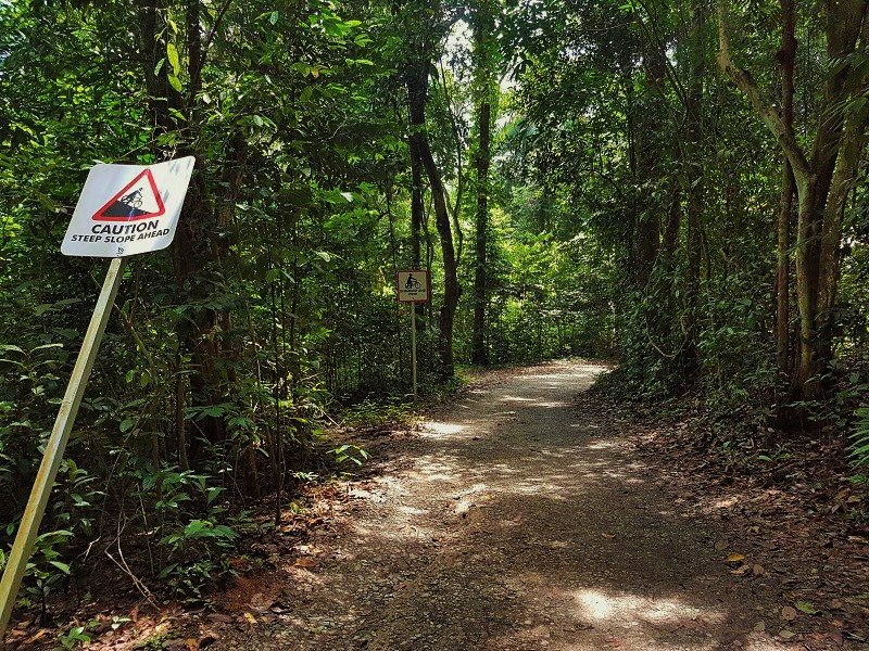 Road to Chek Jawa Wetlands - Detailed Guide to Pulau Ubin