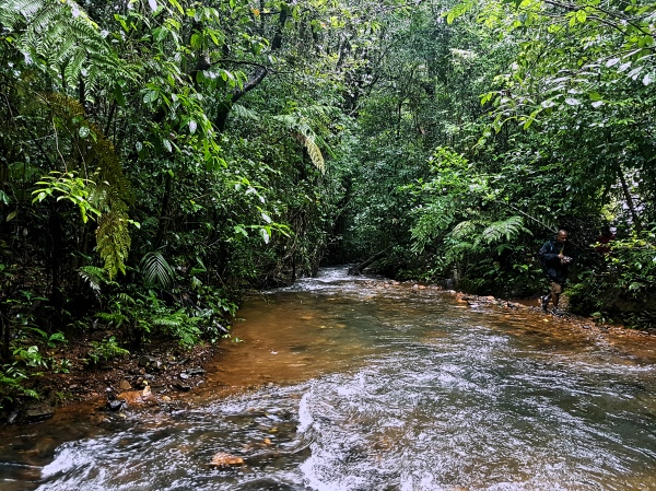 River Stream - Kudremukh Trek