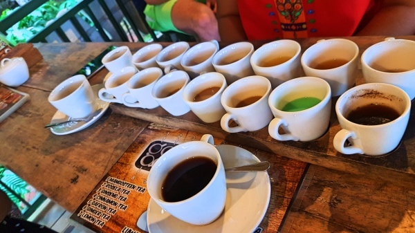 Tasting of Kopi Luwak - Guide To Luwak Coffee Bali