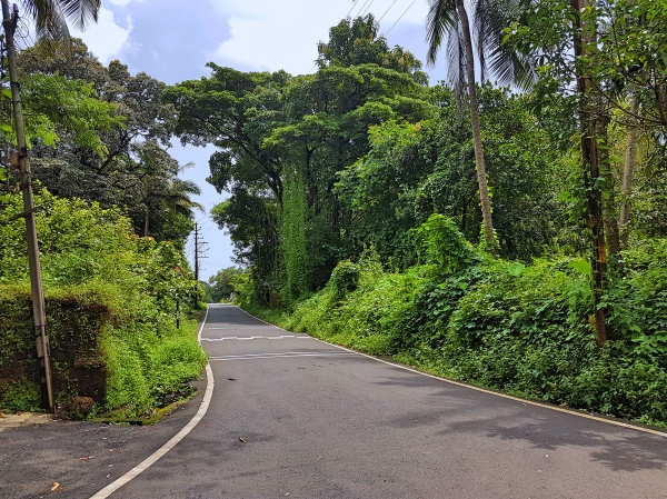 Beautiful Road in Divar Island - Divar Island Goa Tour Guide